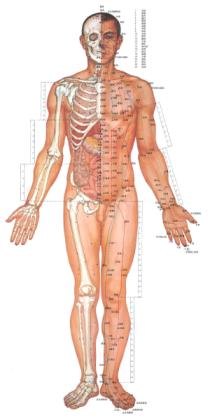 Schmerztherapie Körper, Akupunktur Facharzt Breitenbrunn,
